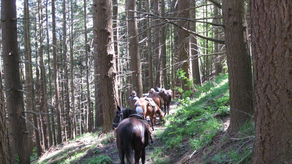 Percorsi a cavallo